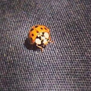 Lady bug luck