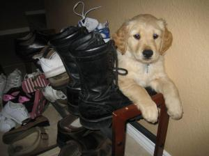 He loved his boots as a pup